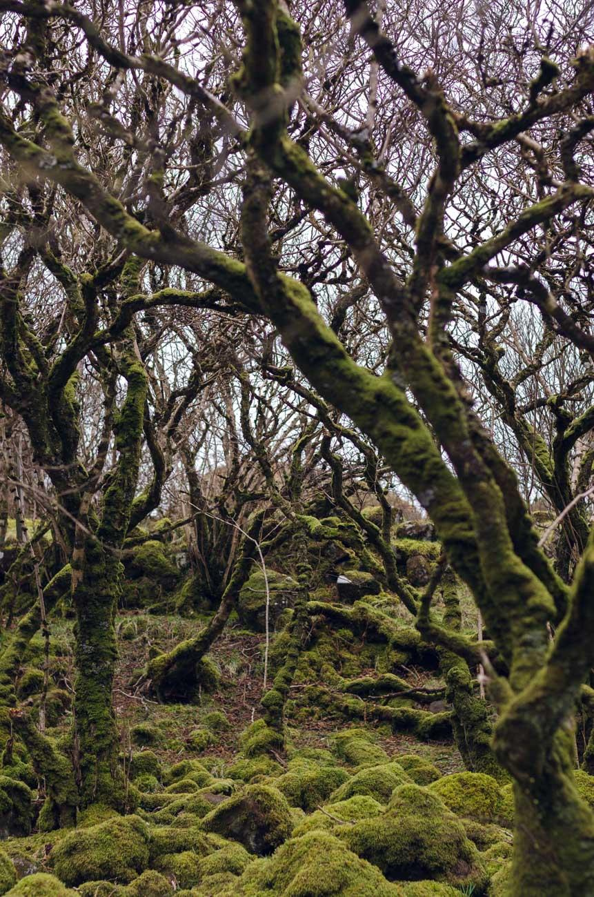 Fairy Glen - pohádkový les
